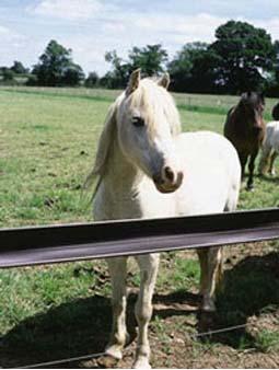 STUDRAIL PVC HORSE FENCE