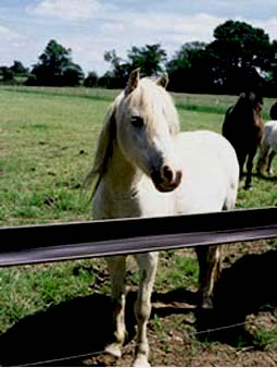 brown studrail horse fencing