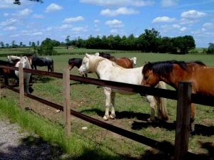 two rail horse fence